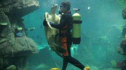 无锡海底世界-海龟