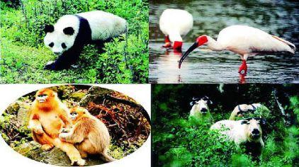 西安秦岭四宝动物园2.jpg