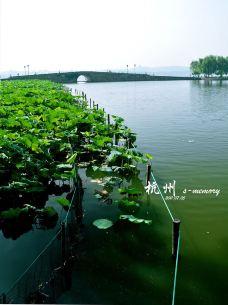 断桥荷塘-2-西湖-杭州-qi****u