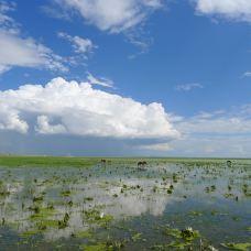 呼伦湖-满洲里-快乐的乌龟