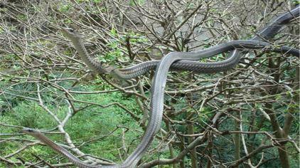 生态蛇池一.jpg
