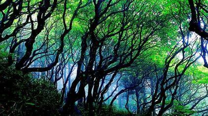 华顶森林公园3.jpg