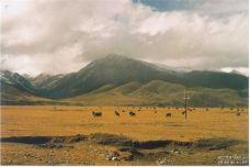 羌塘草原-那曲-garlonggarlong