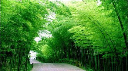 茶山竹海.jpg