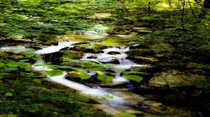 太平森林公园4.jpg