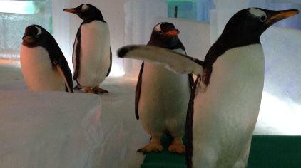 企鹅1.jpg