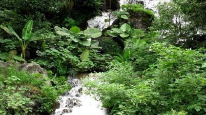 桂林园林植物园2