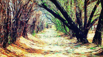 湿地长廊.jpg