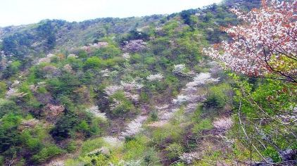 牙山国家森林公园3.jpg
