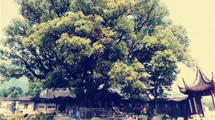 古樟植物园3.jpg