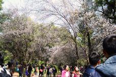 武汉大学-武汉-蘑菇君说不想再宅了