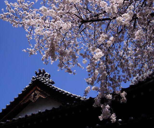 寺廟旁的咖啡店也在春花的點綴下顯得格外誘人,只是我的午飯已有定案