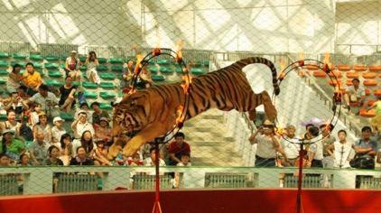 北方森林动物园门票_北方森林动物园门票,北方森林动物园门票价格,北方森林动物园