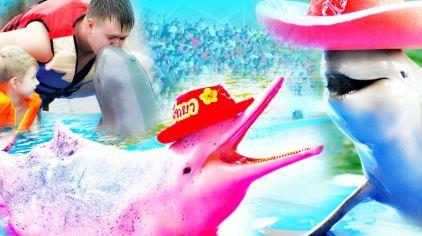 海豚世界2.jpg