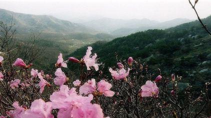牙山国家森林公园8.jpg