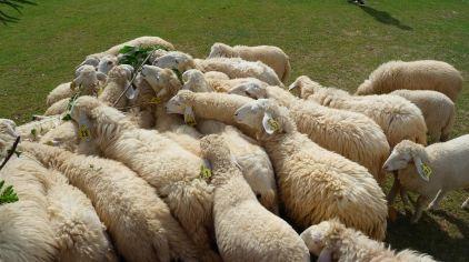 瑞士绵羊农场6.jpg