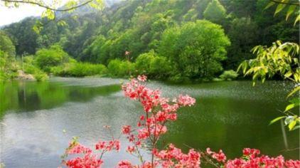 桃花冲森林公园1.jpg