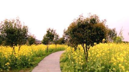 下渚湖湿地2