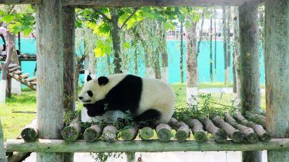 神雕山野生动物园9.jpg