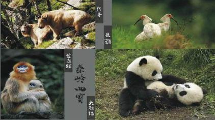 西安秦岭四宝动物园1.jpg