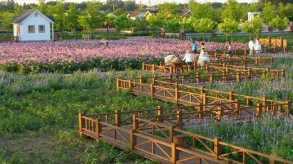 北京亮民绿奥观光园2