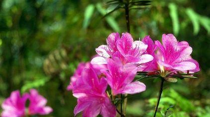 牙山国家森林公园10.jpg