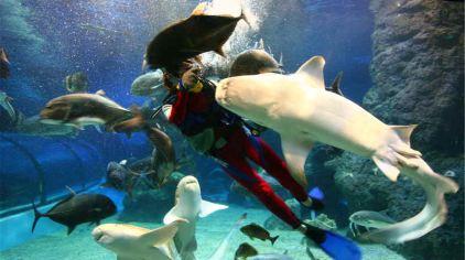 福州左海海底世界1-1.jpg