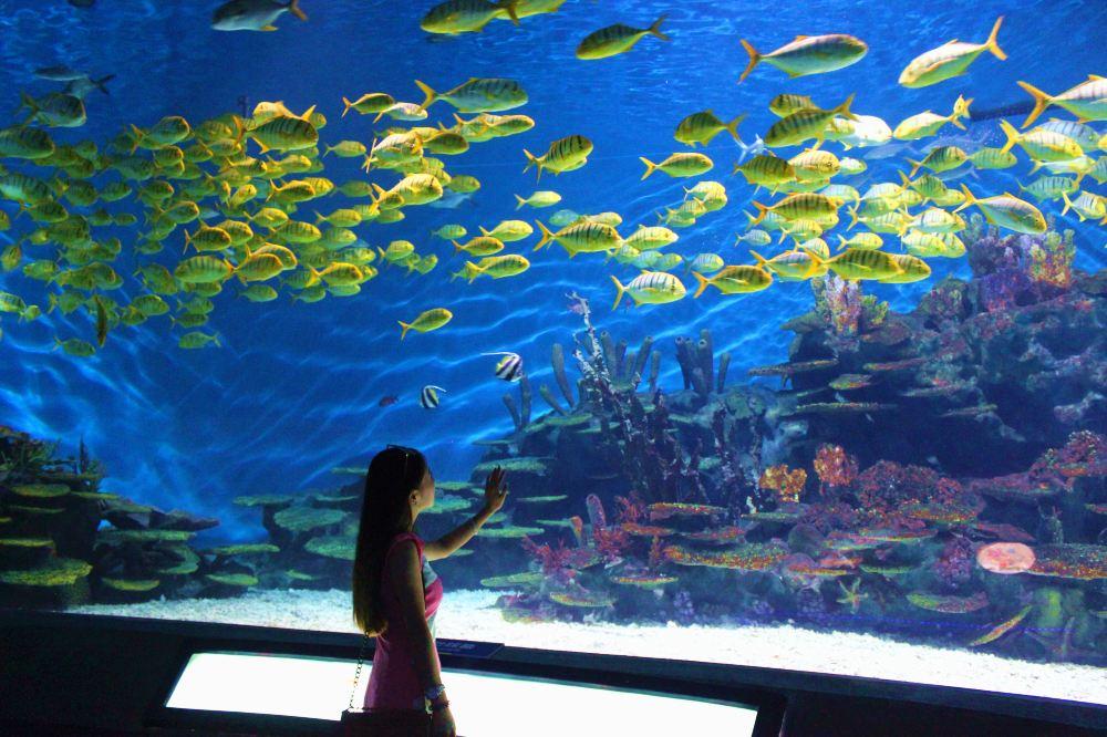 武汉海洋世界图片_武汉海昌极地海洋馆。 - 武汉游记攻略【携程攻略】