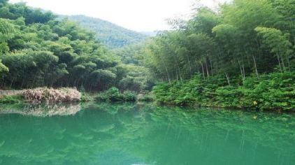 木坑竹海 (8)