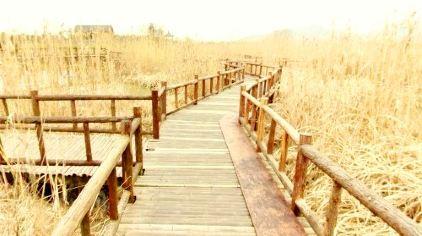 下渚湖湿地3