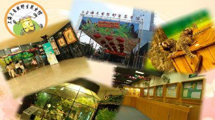 上海大自然野生昆虫馆8.jpg