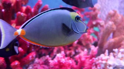 石狮海洋世界 (12).jpg