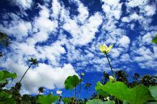 庞普勒斯植物园-毛里求斯-imy****ai