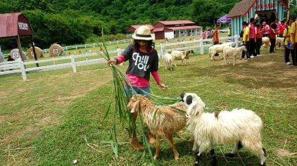 瑞士绵羊农场10.jpg