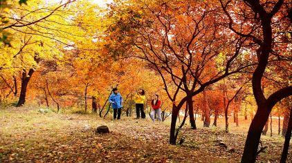 联峰山秋季赏红叶2.jpg