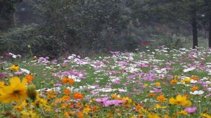 隆中植物园10.jpg