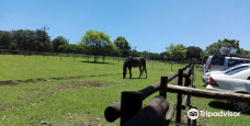 Winsome View Animal Farm & Bistro-Outer West Durban